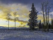 Winter Sunset Tress on Ridge