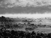 Sea smoke laying over the cobble shores of Saints Rest
