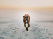 Canadian Winter Adventuring