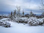 November 2018 Snow Fall