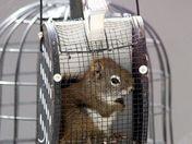 Red squirrel adventure