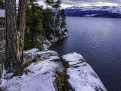 Tree on Snowy Cliff