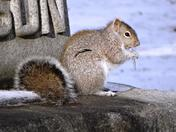Squirrel with Icicle