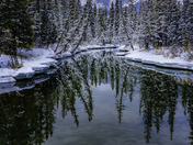 Snowy Wonderland at Policeman Creek