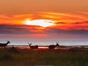 Sunset and deer silhouette