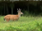 Deer with the Munchies
