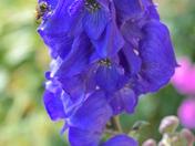 Autumn bee's favourite