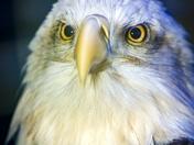 Eagle-Eyed