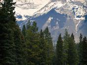 Banff Grazers