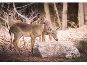 Beautiful deers