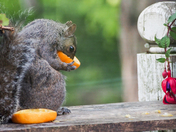 Oranges for Orioles