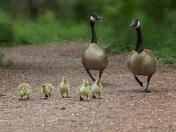 Sunday Morning Family Stroll