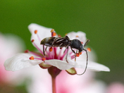 Insect and blossom