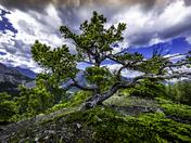 Tree Wasootch Ridge