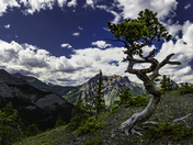 Twisted Pine Wasootch Ridge