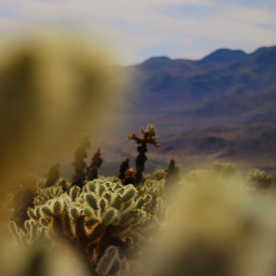 Joshua Tree Nation Park