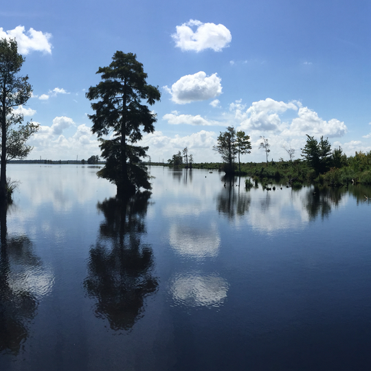 Great Dismal Swamp National Wildlife Refuge