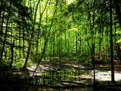Forest, no Gump
