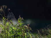 Cobweb in the light of dawn.