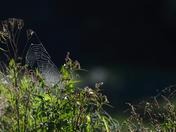 Cobweb in the light of dawn.