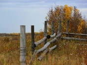 Autumn Fences