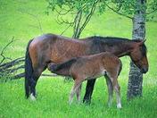 Wild Horses Feeding Time