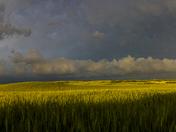 Prairie Panoramic