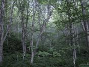 Forêt boréale. Boreal Forest