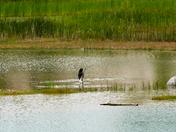 New Wetlands