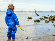 Boy looking at the Pacific Great Blue Heron