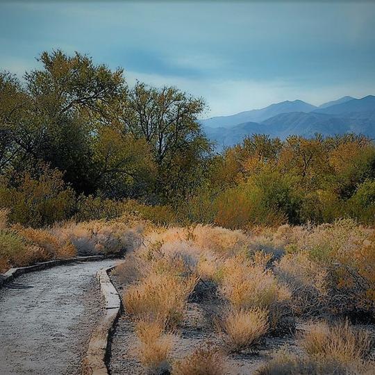 Desert National Wildlife Refuge (NWR)