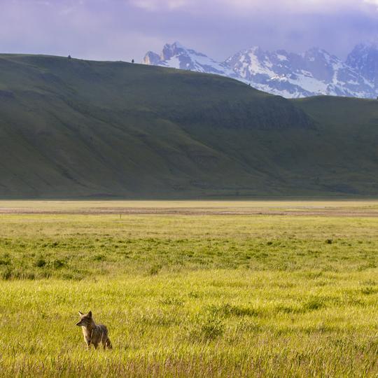 National Elk Refuge National Wildlife Reserve