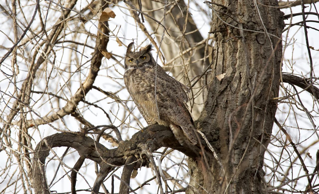 GHO on old tree