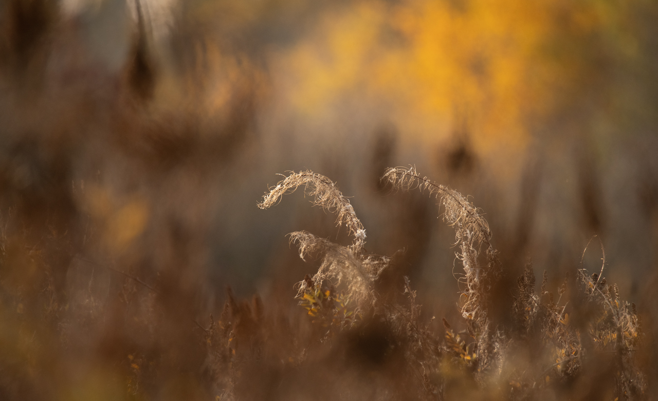 Reed Grass and Autumn Colors