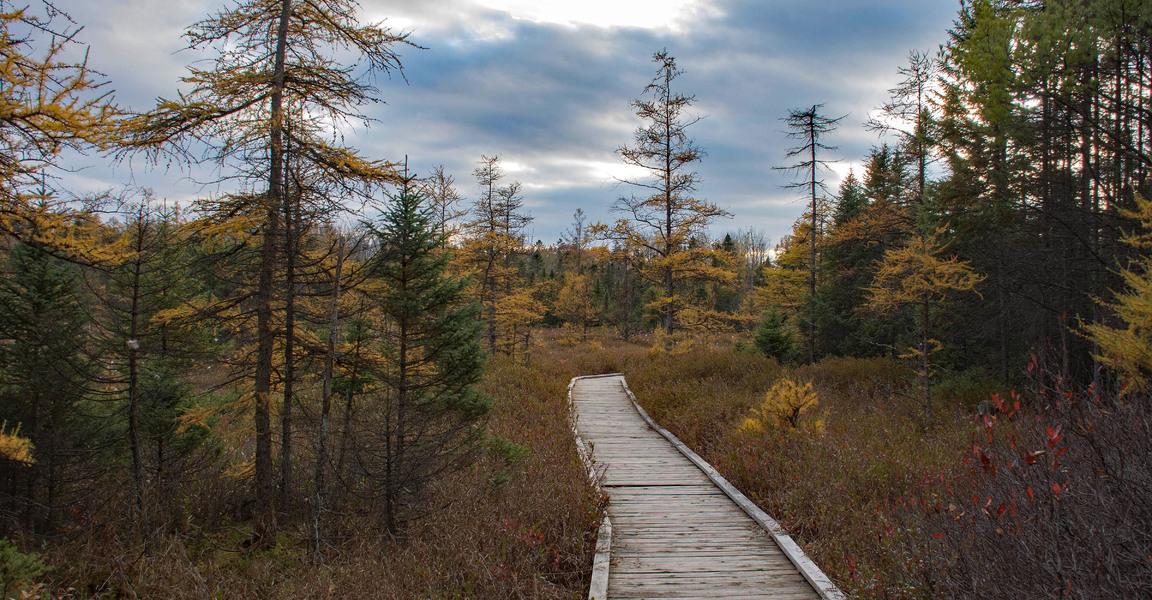 Sifton Bog Boardwalk