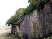 Ireland - Old Outbuilding