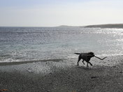 all the ocean a Labrador could dream of.JPG