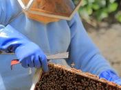 checking the hive I.JPG