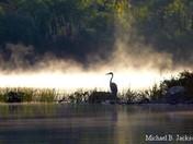 Misty Heron