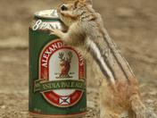 Thirsty chipmunk