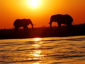 Elephant Rendezvous