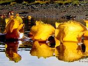 Seaweed - Brigus South, NL