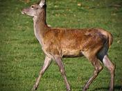 Elk-7.jpg
