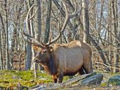 Elk-8-1.jpg