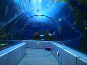 Ocean Tunnel - Quebec Aquarium