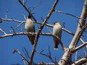 a hardy pair of birds
