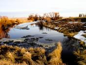 A marsh outside Miller Sask