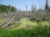 Where algae grows