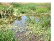 Glen Miller Pond