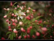 Spring in Arboretum  2010.jpg